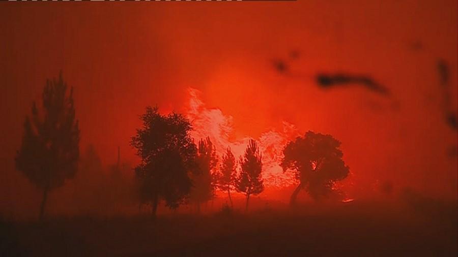 Incêndios evoluem com 'muita violência' em Vila de Rei e Sertã